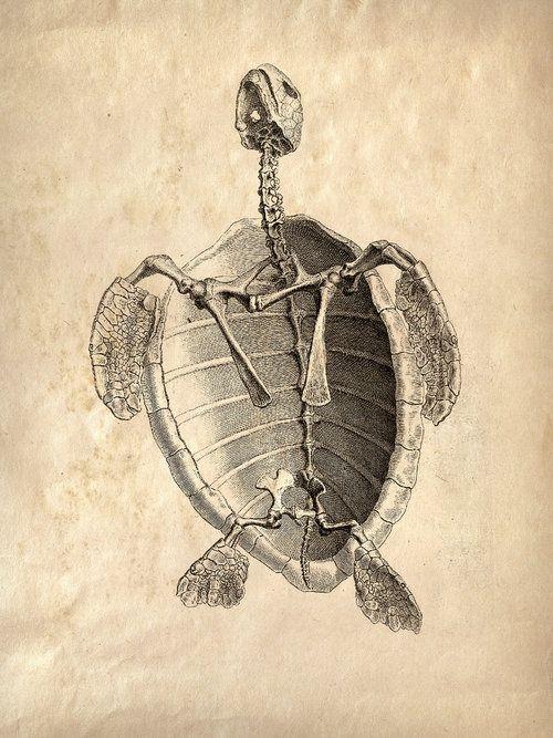 Scientific Illustration | Art and Design | Pinterest | Tortuga ...