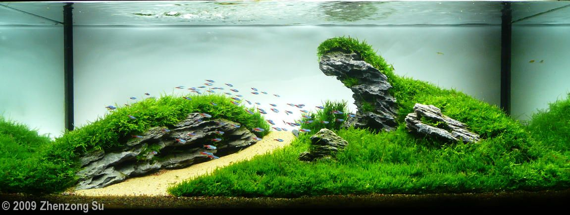 Image gallery mountain aquascape - Gallery aquascape ...