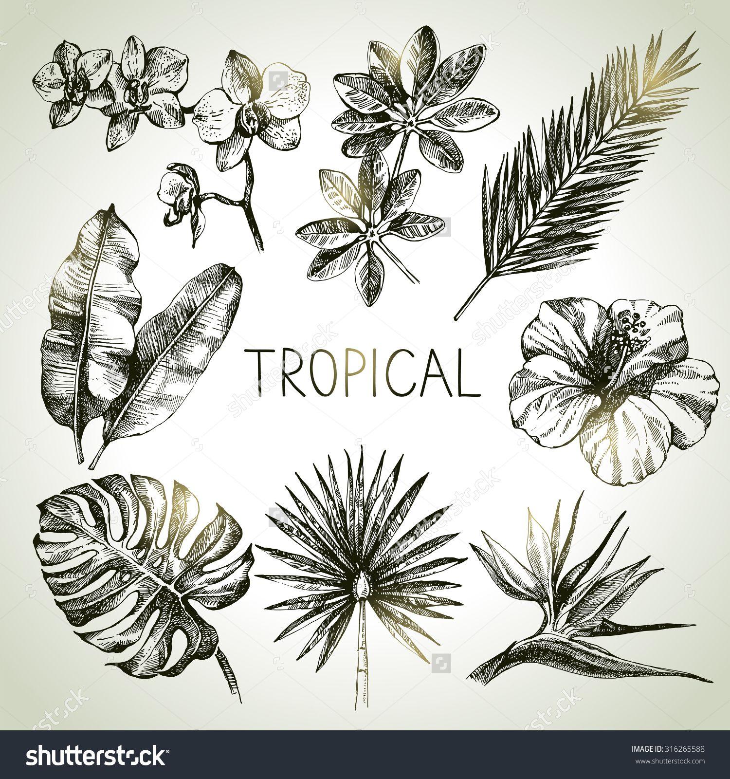Hand Drawn Sketch Tropical Plants Set. Vector Illustrations - 316265588 : Shutterstock