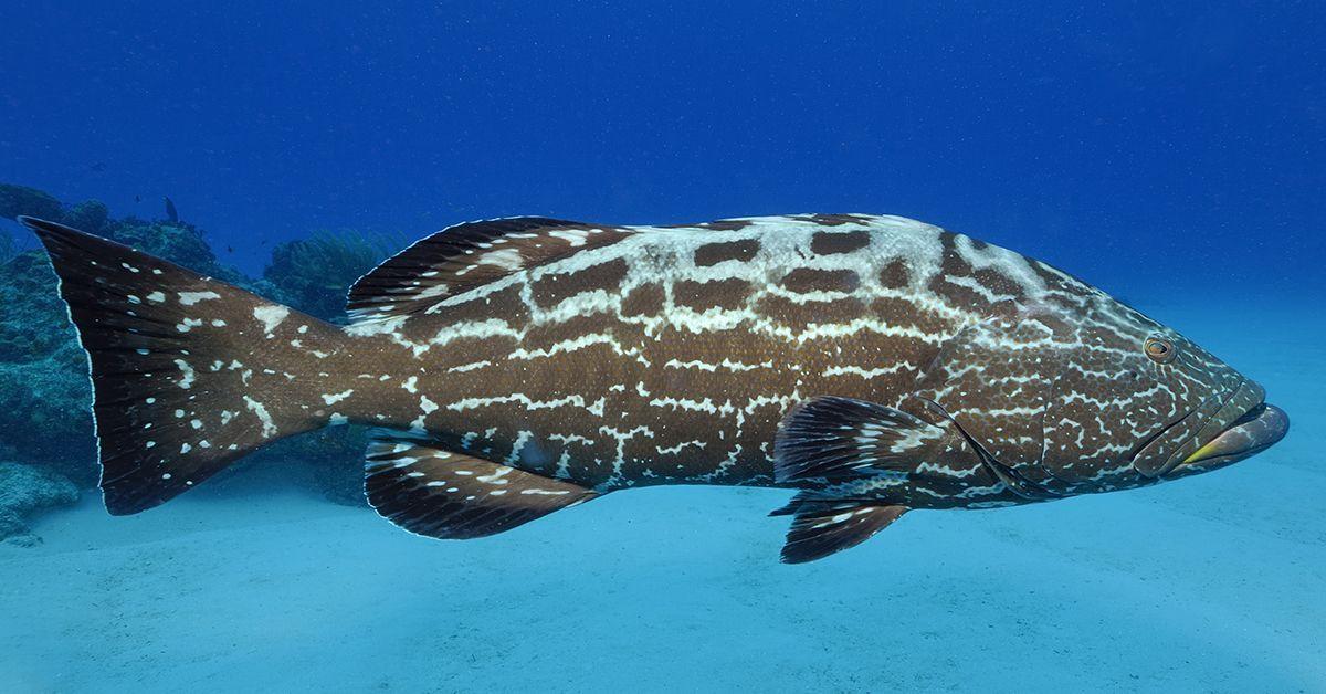 Grouper UK dating