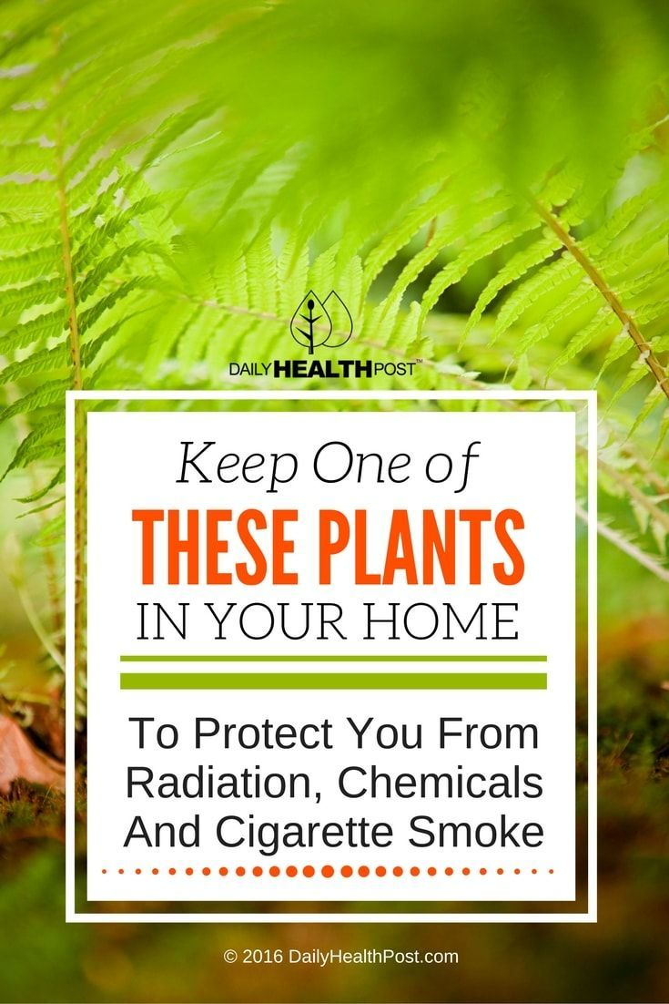 A Heavy Metal Detox To Clear Out Toxins Fast Plants, Air