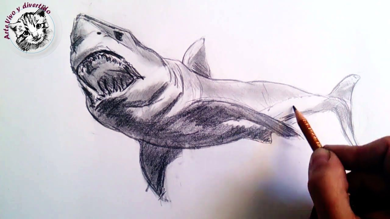Como Dibujar Un Tiburon A Lapiz Paso A Paso Tecnicas Lapiz De