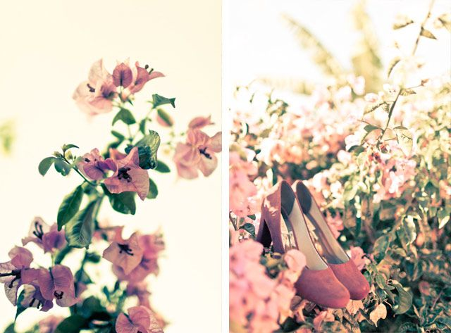 Plum Flavor #flowers #spring #pink