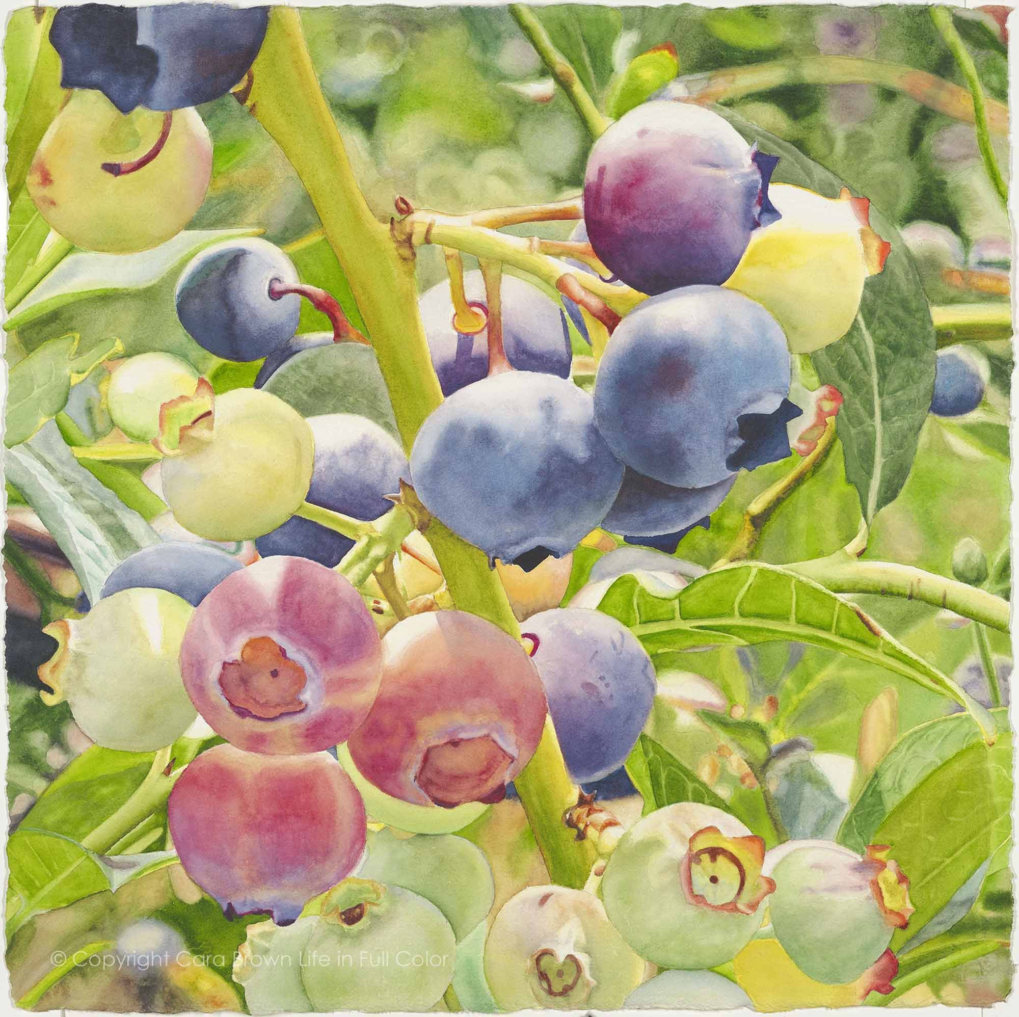 """Blueberry Symphony 22""""x22"""" Cara Brown - Life in Full Color www.lifeinfullcolor.com"""
