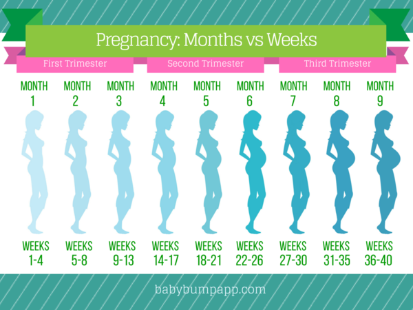 Pregnancy Months Vs Weeks I Timeline Of Bumps Baby Wishes