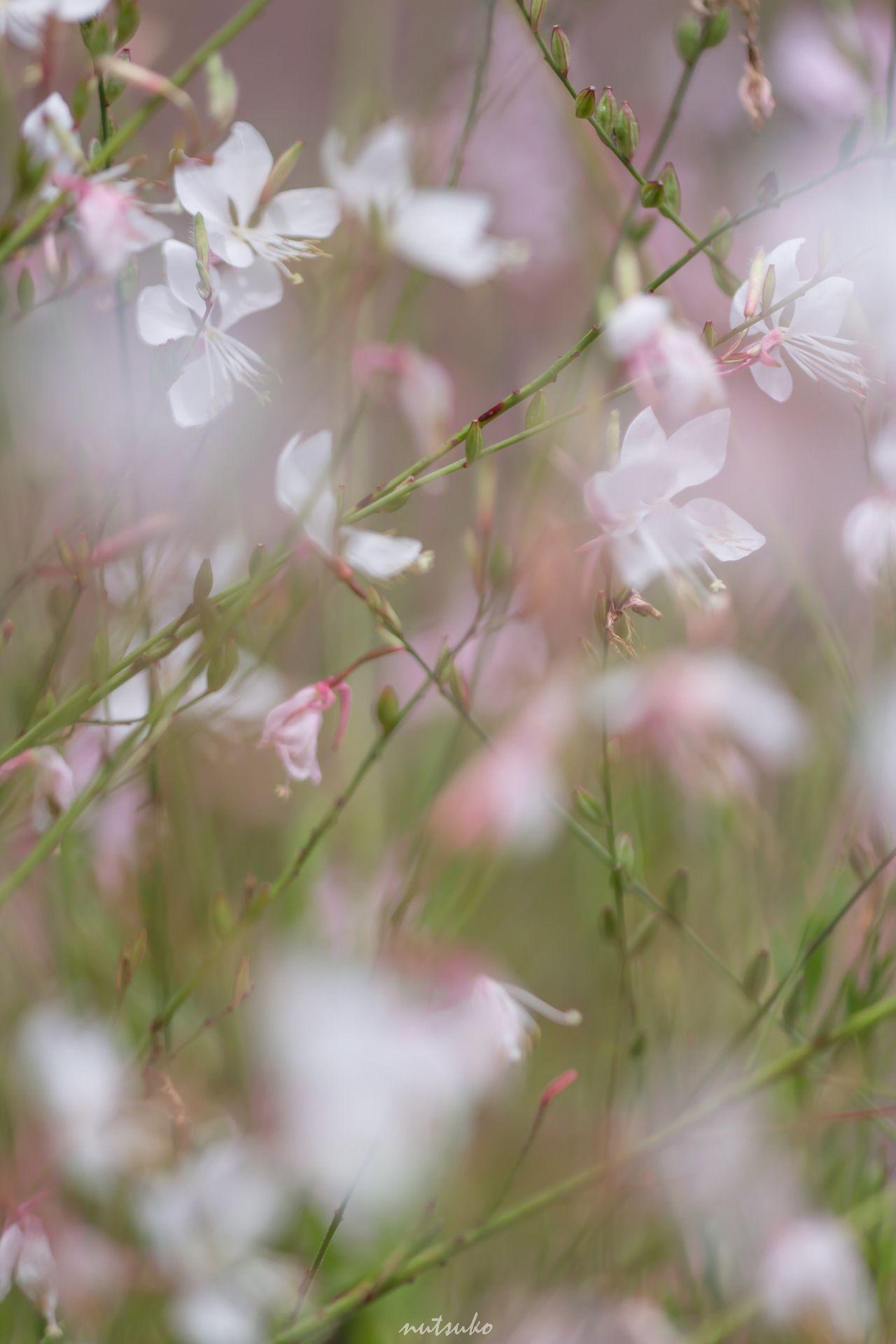 3a0d368909ac3edc36d8ea9cef8bbb57 Luxe De Fleurs De Jardin Des Idées