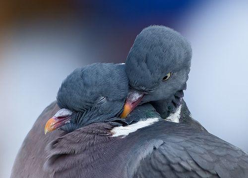 10+ How do pigeons sleep trends