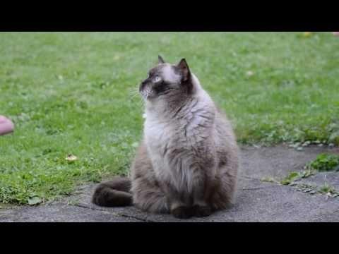 Красивые кошки подборка самых лучших кошек.