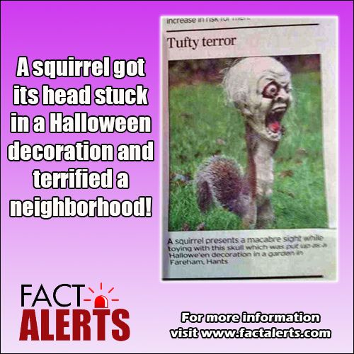 Squirrel Head Stuck Halloween Lol Pinterest
