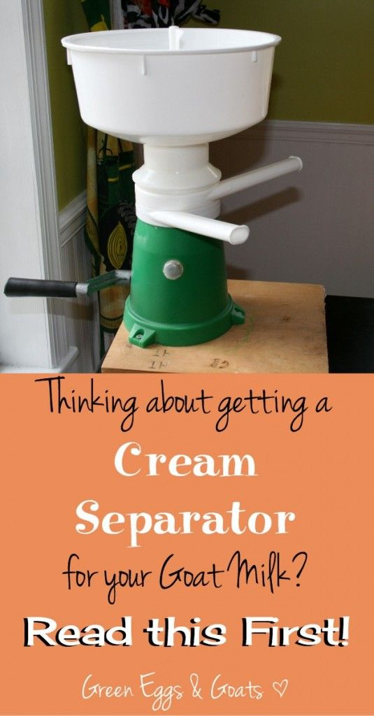 Thinking about getting a Cream Separator for your goat milk?  Read this first!  #homesteading #goats #rawmilk