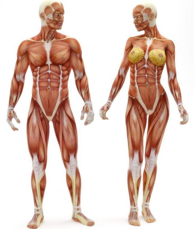 Algunos datos curiosos sobre el cuerpo humano El cuerpo humano