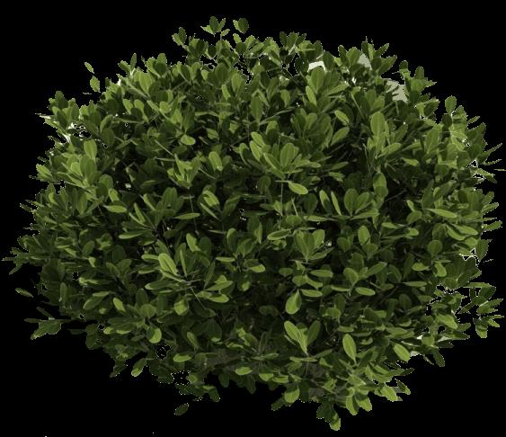 Bush Transparent Png Tree Photoshop Shrubs Colorful Shrubs