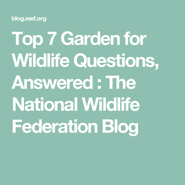 Top 7 Garden for Wildlife Questions, Answered : The National Wildlife Federation Blog