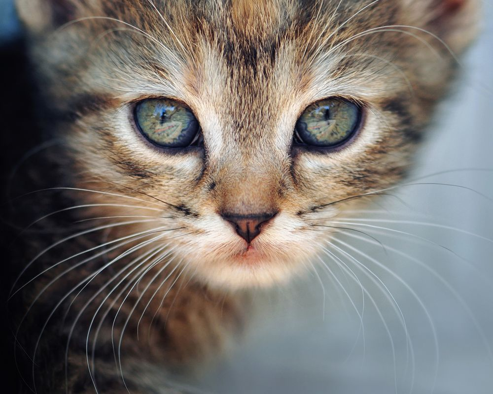 Reflection in the eyes Photo by Zoran Milutinovic -- National Geographic Your Shot