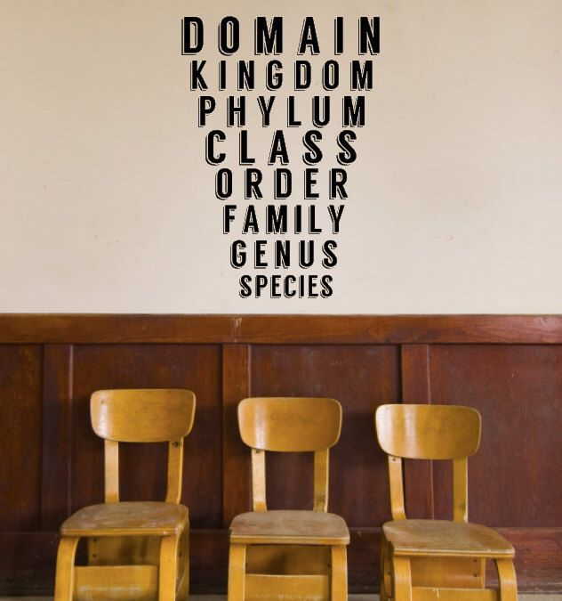 Great Classroom Decor ~ Science class taxonomy decal biology classroom