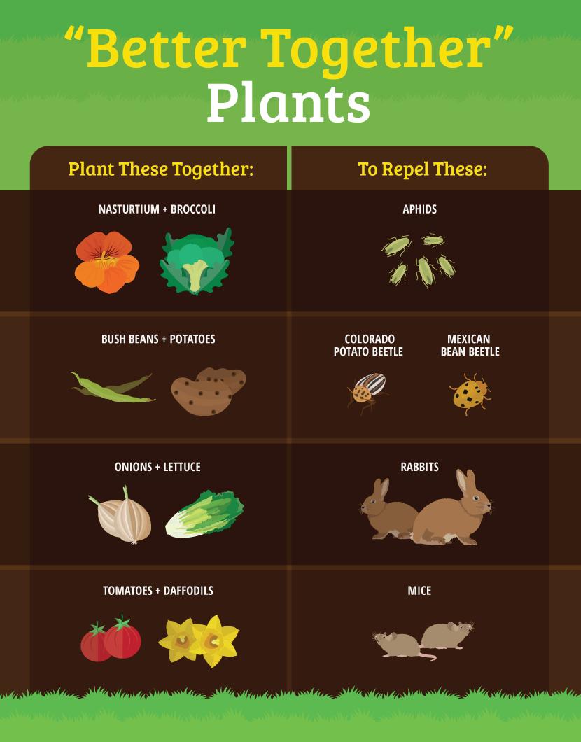 Enjoy a BugFree Garden PestResistant Plants, DIY Bug