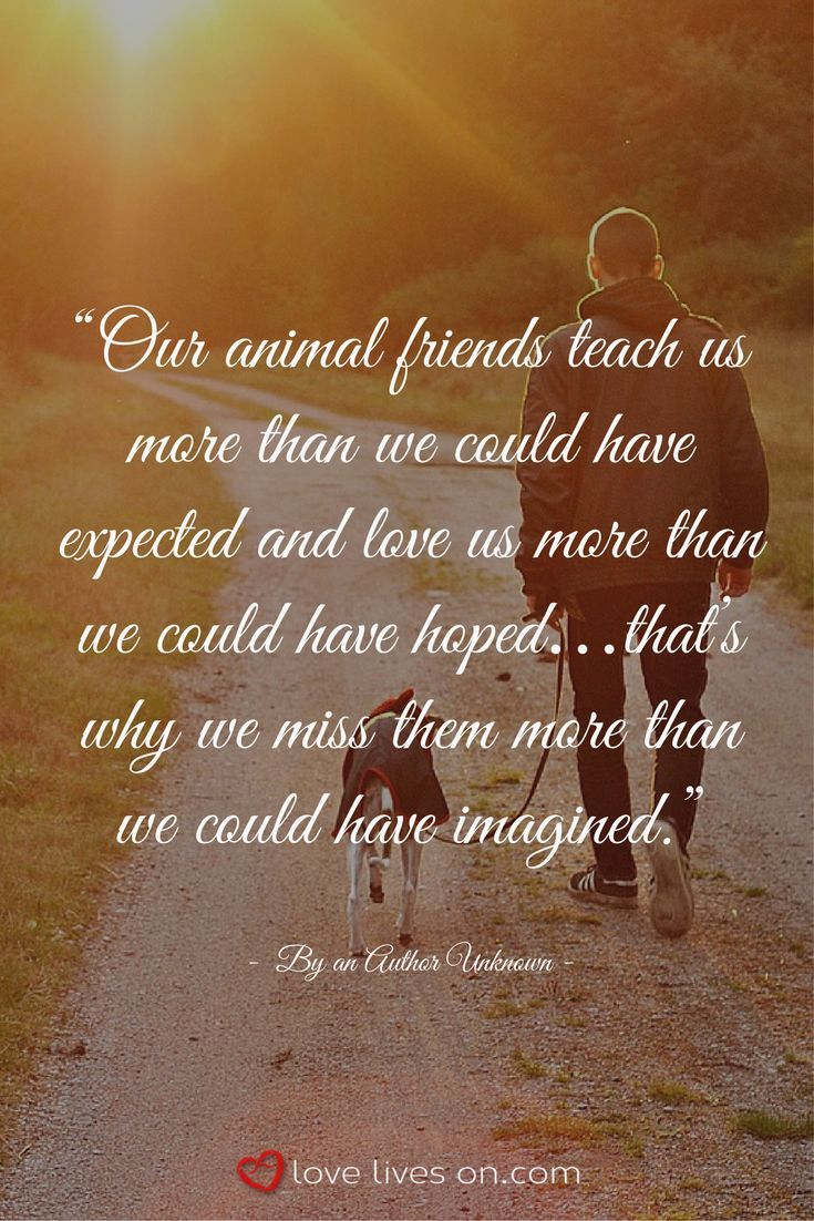 So True Pet Quotes Dog Losing A Pet Quotes Dog Poems
