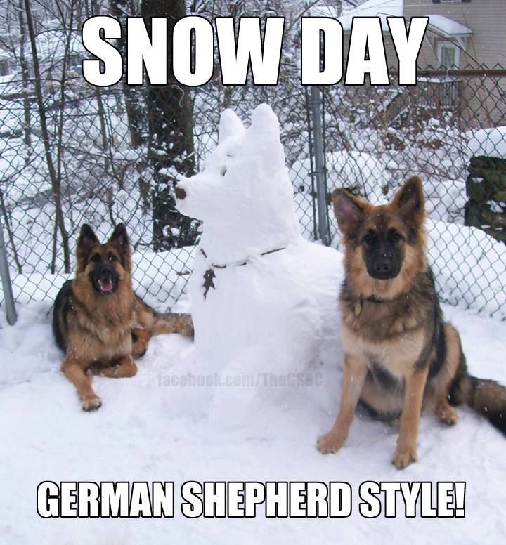 Snow Day Fun With A German Shepherd Snow Dog German Shepherd Memes German Shepherd Puppies Shepherd Puppies