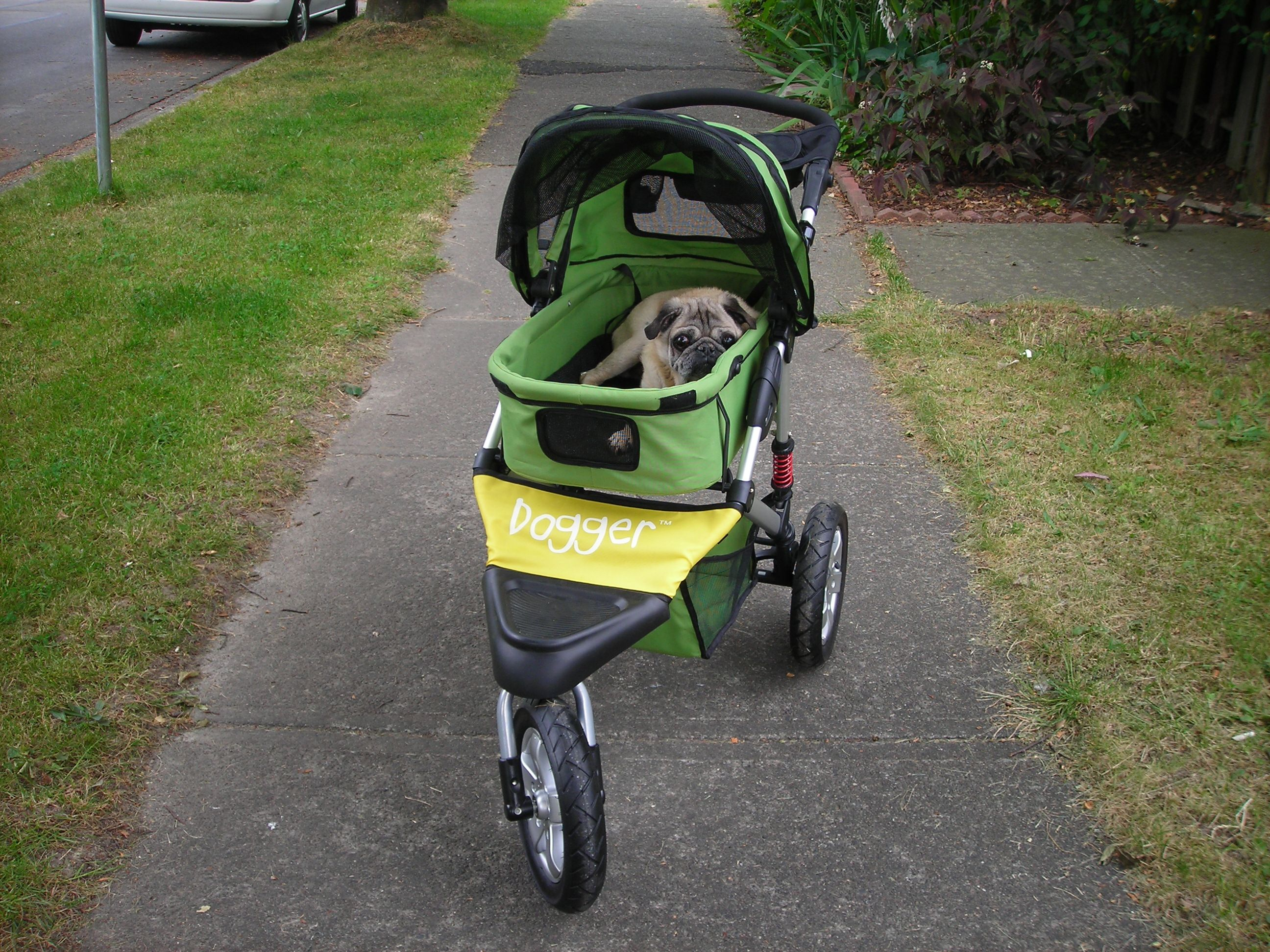 Canada's Coolest Dog Stroller for Older Dogs Dog