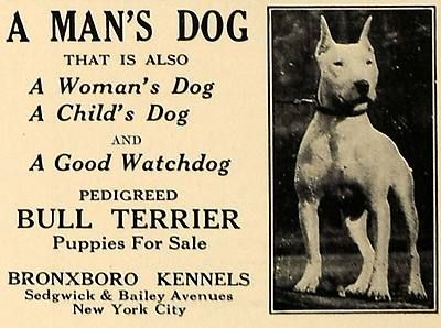 1927 Advertisement For The Bronxboro Kennels Breeders Of The