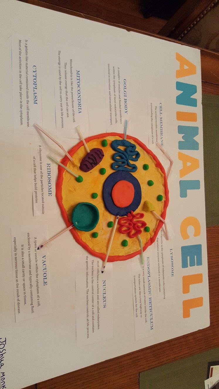 Animal Cell Project play Doh 7th grade Printed the names ...