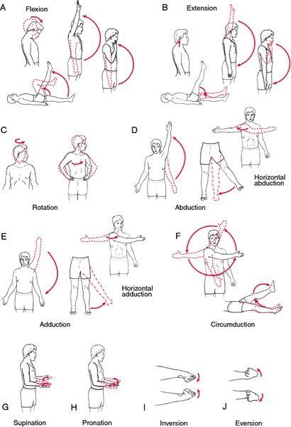Range of motion angles from speaking ot pinned also shoulder chart the rh pinterest