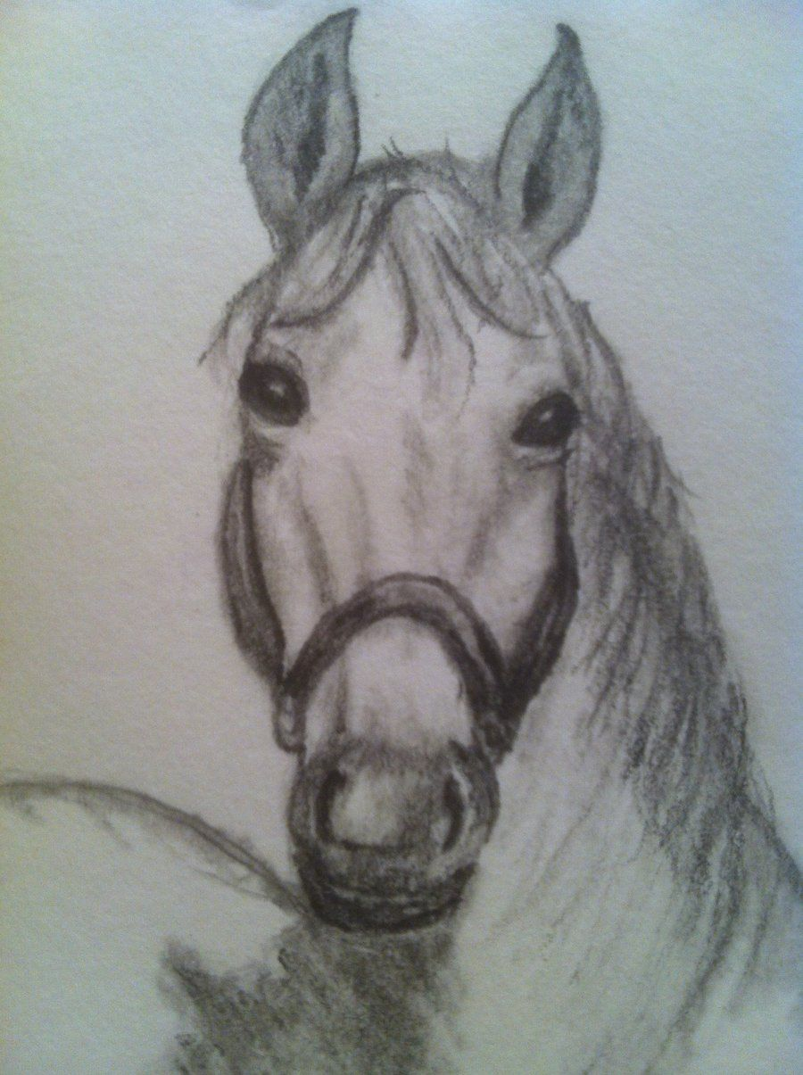Pencil Study Horse Head Front View By Piroscsizmaiantart On @deviantart  Pencil Study Horse Head Front How To Draw