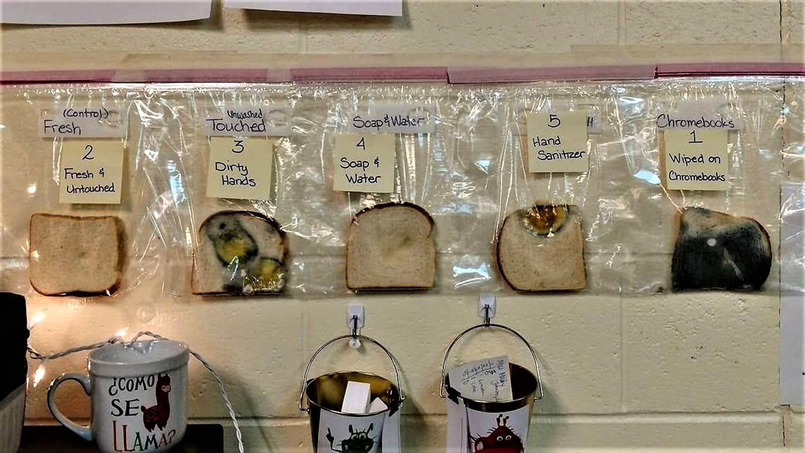 Bread Experiment Will Help To Teach Children To Wash Their Hands
