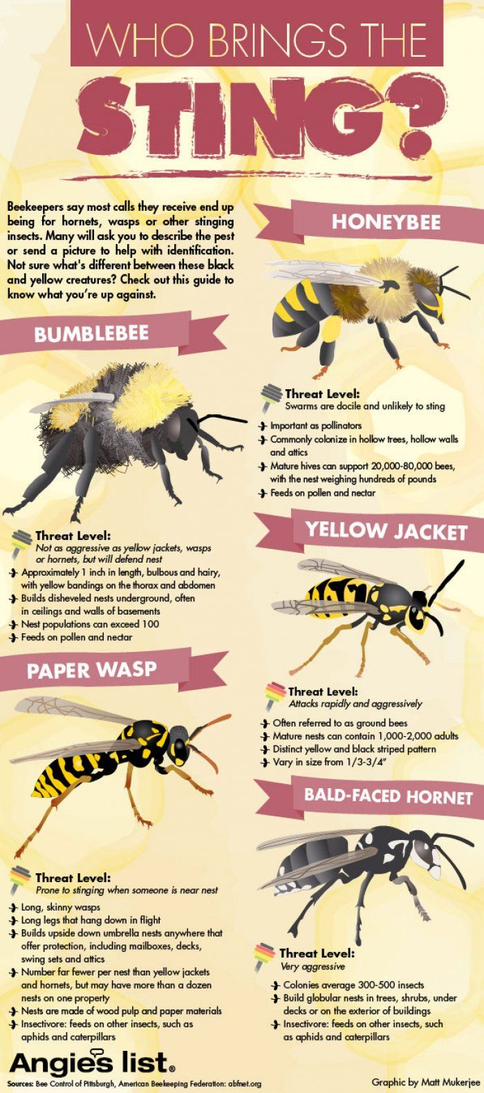 Bees Vs Wasps Who Brings The Sting Infographic Daily Infographic Wasp Bee Identification Types Of Bees