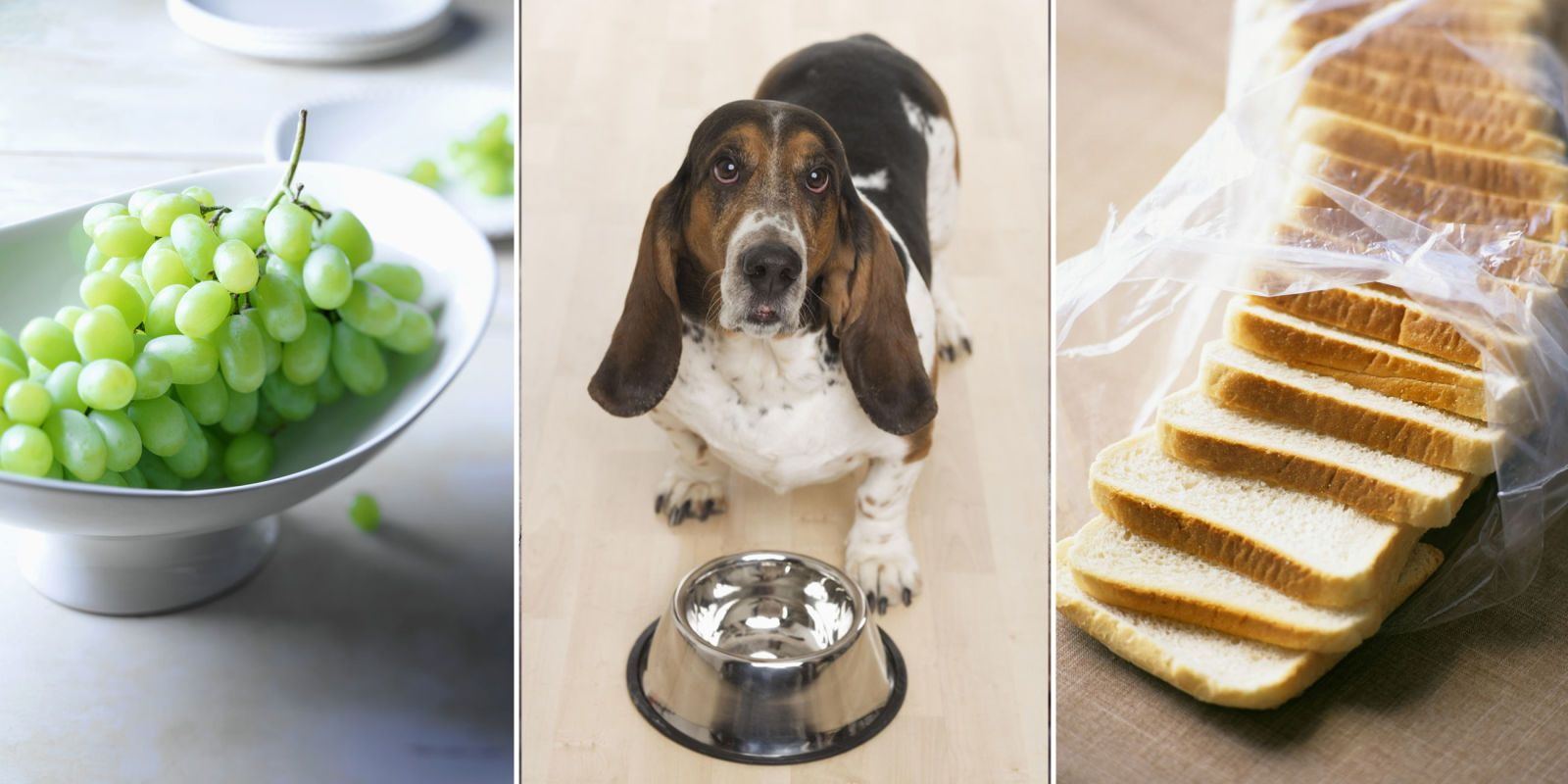 13 Things You Should Never Feed Your Dog - GoodHousekeeping.com