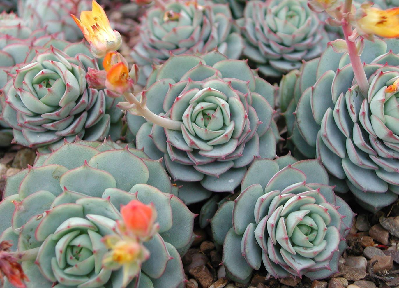 Mini Plante Grasse Les 10 Plus Jolies Pour Votre Deco Interieure