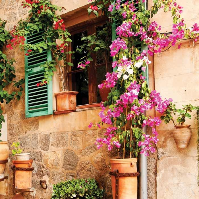 Vliesová fototapeta - Květinové okno