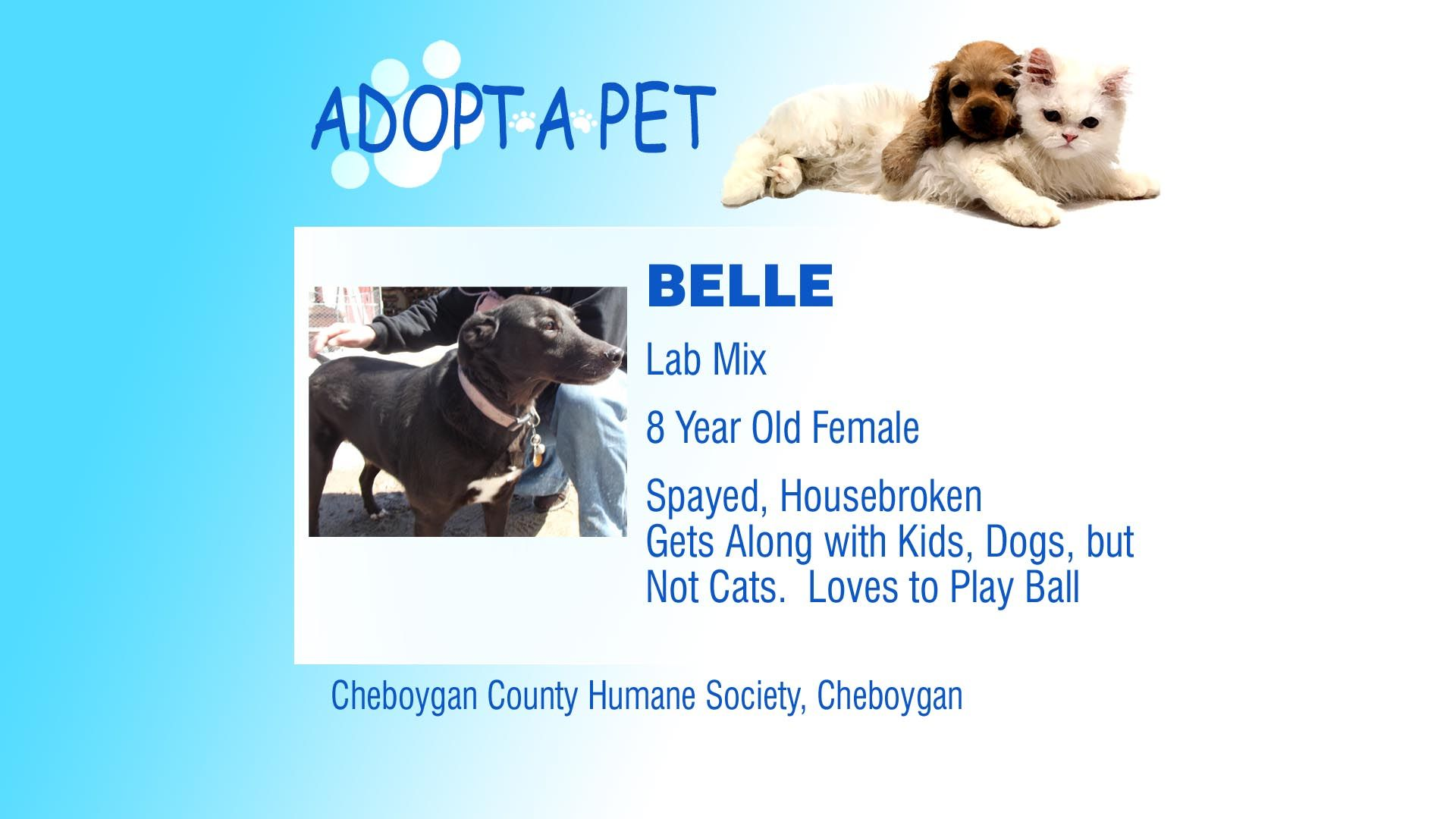 Adopt a Pet Tuesday Freya, Belle & Hank Pets, Adoption
