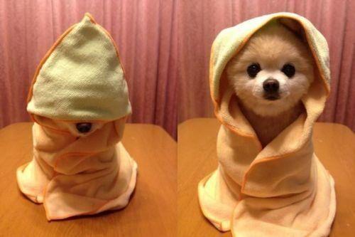 Adorable spa doggy.