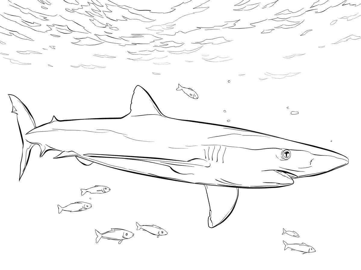 blue shark coloring pages - photo#5