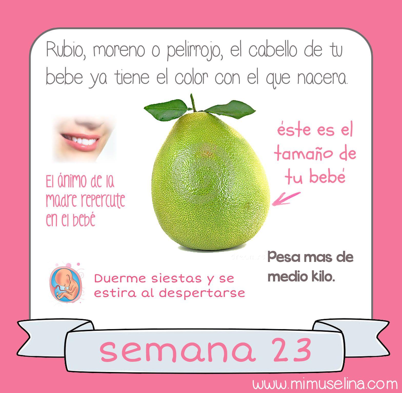 Semana 23 Embarazo Tamano Y Evolucion Del Bebe Mimuselina Con