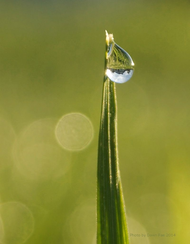 Photo of the Day: Dew Drops - News - Bubblews