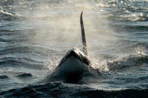 Orca , British Columbia