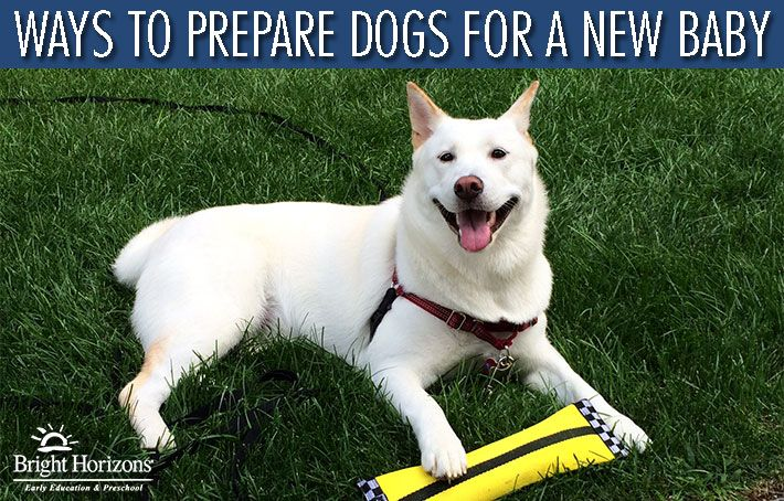 Ways to Prepare Dogs for a New Baby | via @brighthorizons