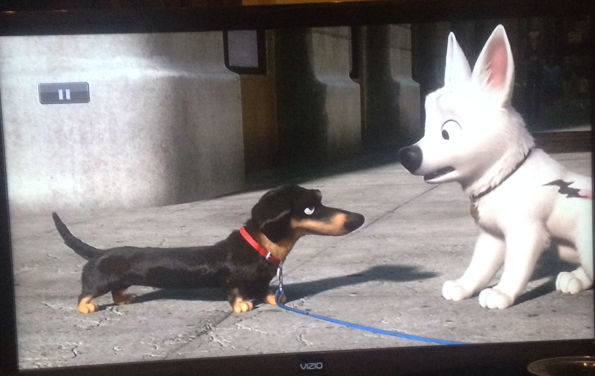 Doxie Making A Friend From The Movie Bolt Doxie Movies Bolt