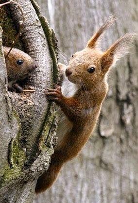 Pin By Daniele Talbot On Squirrels Cute Squirrel Animals Beautiful Squirrel