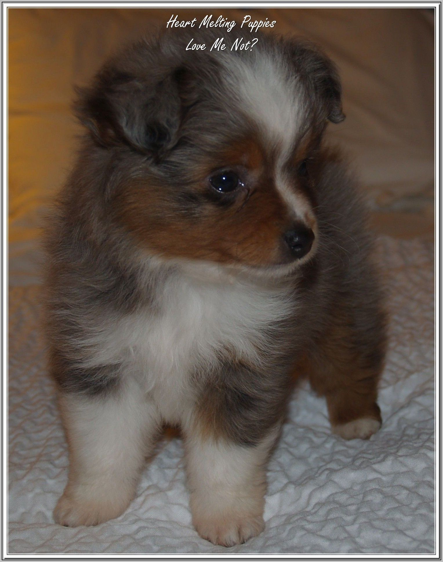 Owning The Perfect Dog For Your Family Cute Baby Animals Cute
