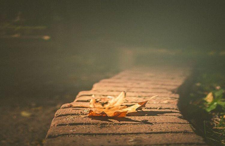 Hoja, otoño, técnicas fotográficas, mar vidal