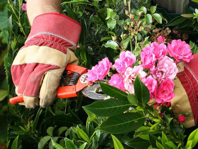 Épinglé sur jardinage