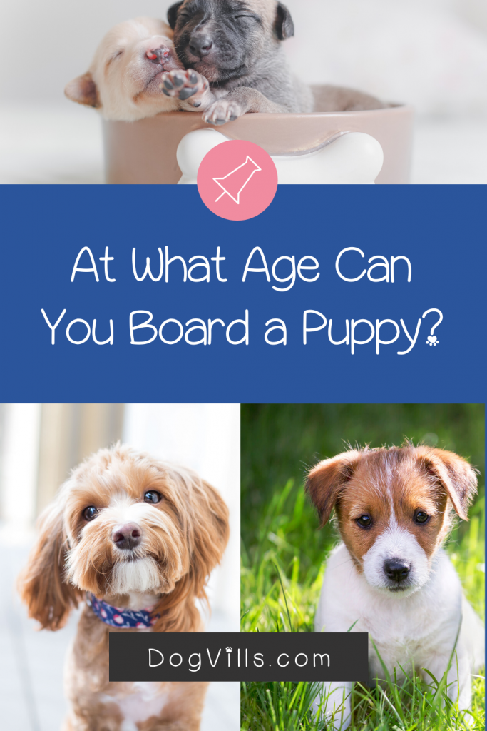 At What Age Can You Board Your Puppy Dogvills In 2020 Puppies Dog Boarding Facility Puppy Adoption