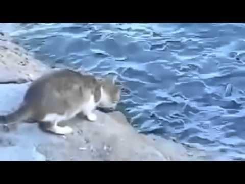 Cat pegou peixe na água