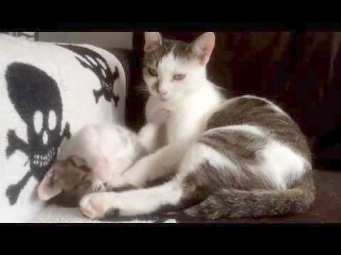 cute kittens rolling cute cats for whatsapp dp cute cats and