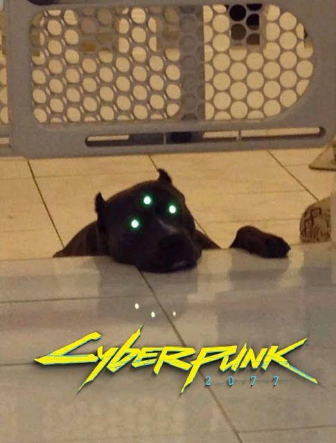Cyberpunk 2077 Memes Cyberpunk 2077 Cyberpunk Lustig