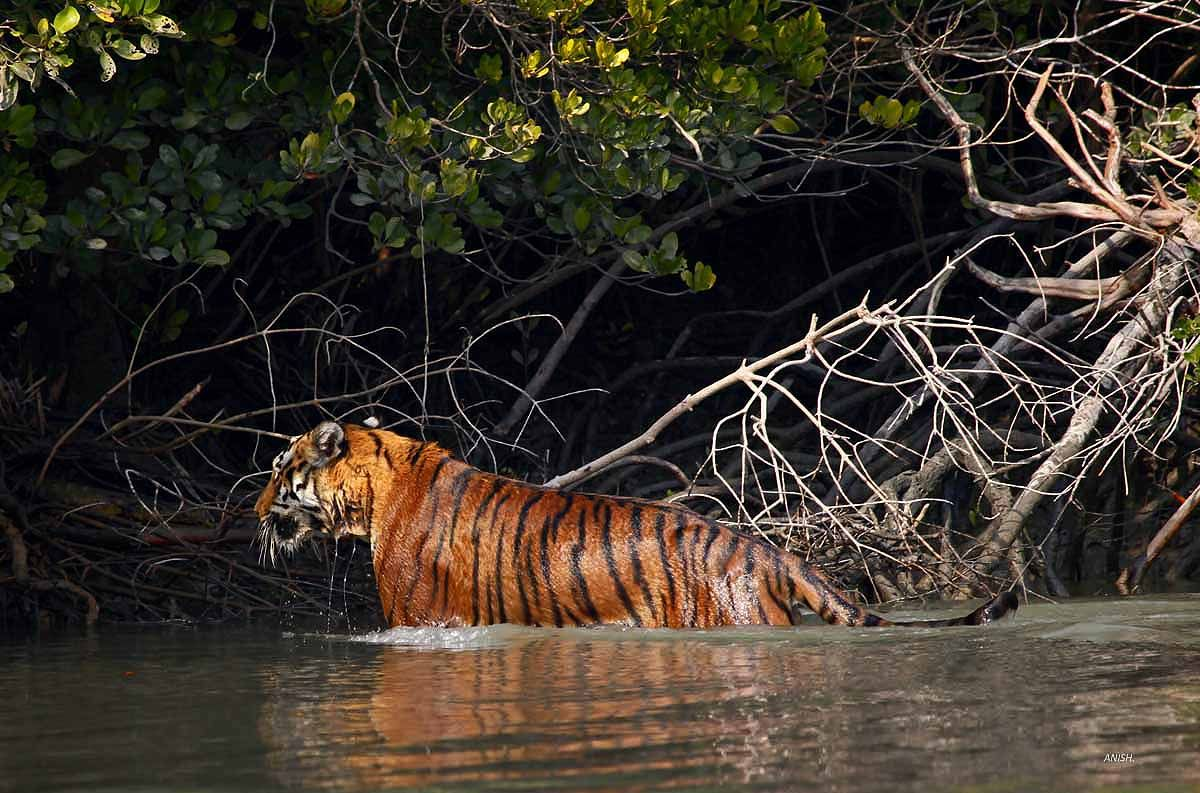 10 Best biosphere reserves in India- sundarban