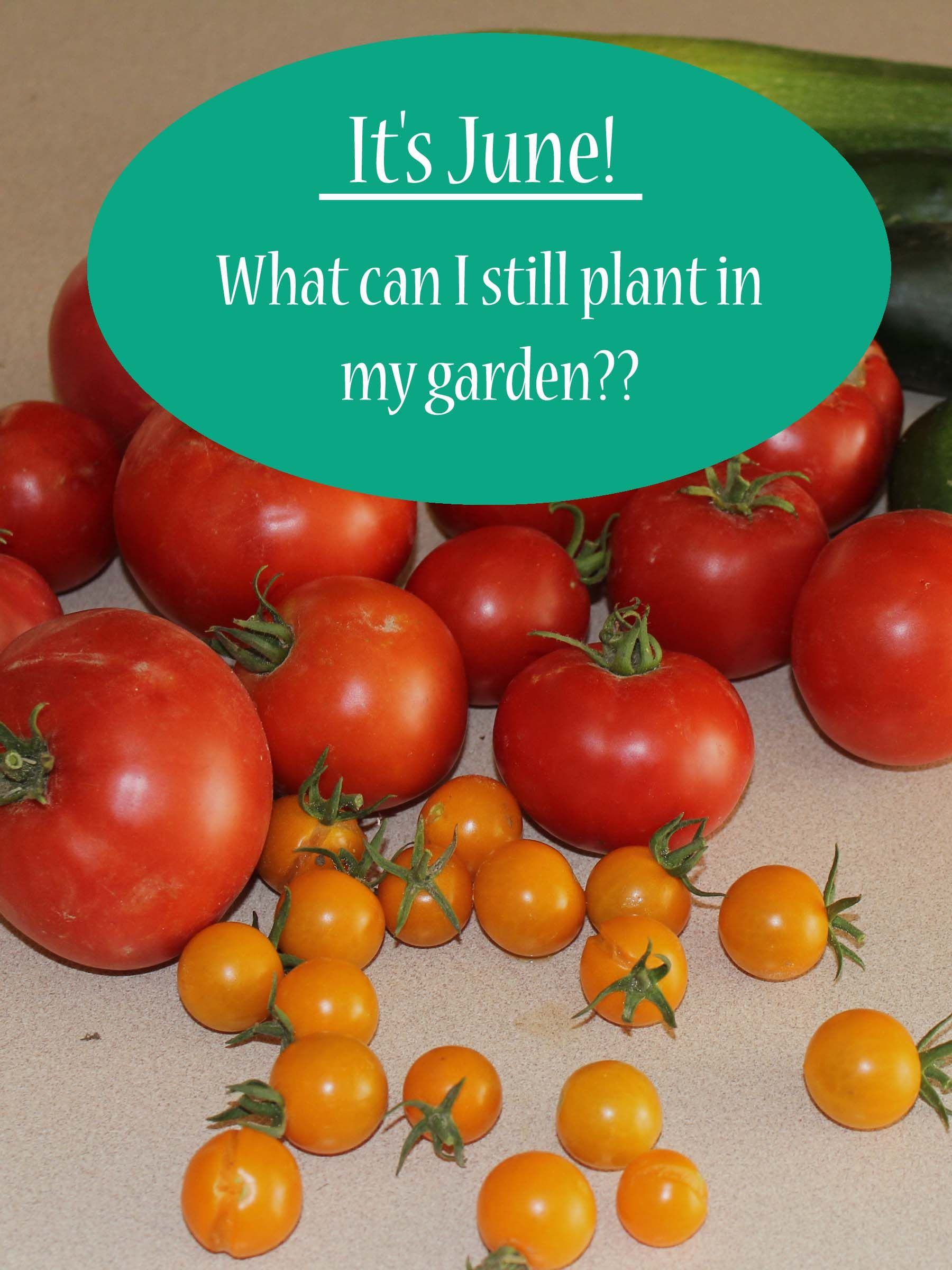 June Planting Guide - It's not too late to Plant! - Our Stoney Acres